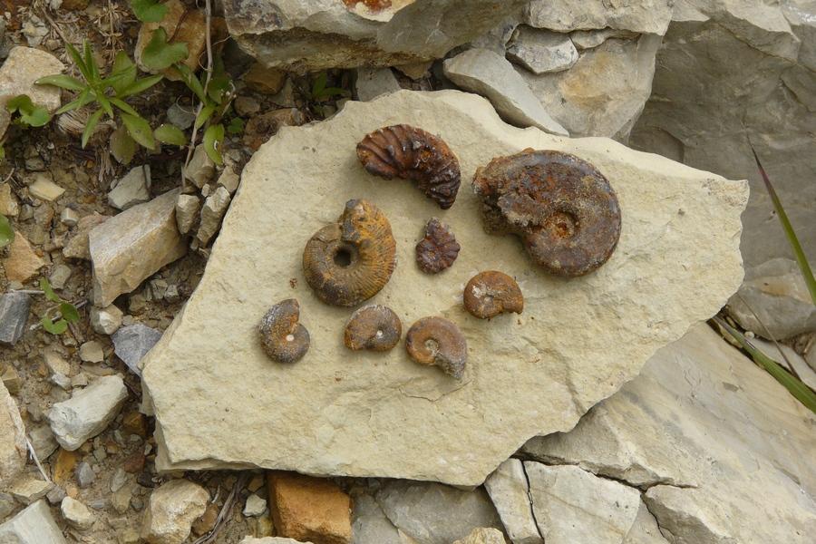 randonnée géologie Dévoluy fossilles ammonites accompagnateur montagne nature