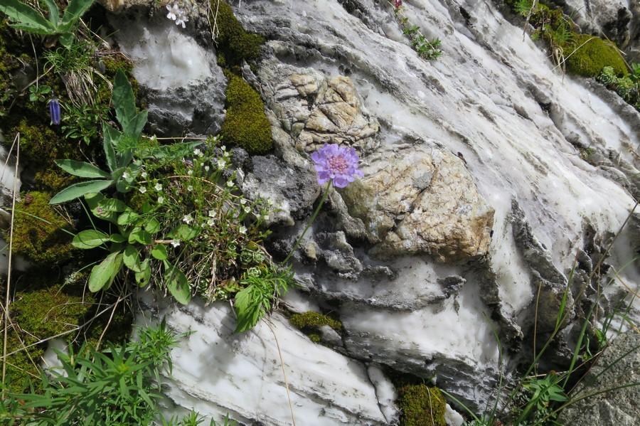 randonnée accompagnateur géologie vaslsenstre marbre esprit parc national